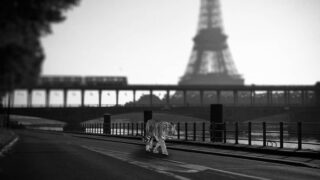 Création Photoshop du jour réalisée à partir d'une photo faite par @bricebaubit  #webdesigner  #pictureoftheday #adobephotoshopcc  #paris #france🇫🇷 #france  #surrealistic #motiondesigner #motiondesigner #graphicdesigner #repost #artoninstagram #artwork #photopassion #photoshop #adobe #adobephotoshop #graphisme #artvisual  #toureiffel #toureiffelparis #tigre #tiger #tigerinparis #confinement